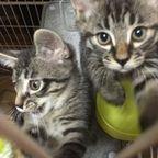 里親さん募集中の子猫たち