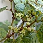 植物2(201507-)