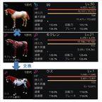 【黒い砂漠】馬の交配・交換結果