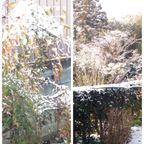 昨夜、深夜からの雪、埼玉でも少し積もりました。そしてもう少しで春ですね^^ たらの芽、タケノコが待ち遠しい^^; 食欲の春・・・・|熟女NHヘルス孃マダム舞の袖振り合うも他生の縁