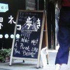 岩合光昭の世界ネコ歩き「ニューヨーク」