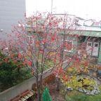 気象・気候・花・木・鳥