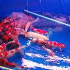 ペット用の魚が一杯 プラー・スアイガーム・JJマーケット near JJ市場