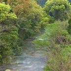 萌える水辺の森