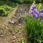 花 家庭菜園