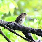 南伊豆 四季の野鳥5