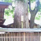 区民誇りの木