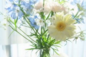 *blue and white。。花たちに癒されて。。♪
